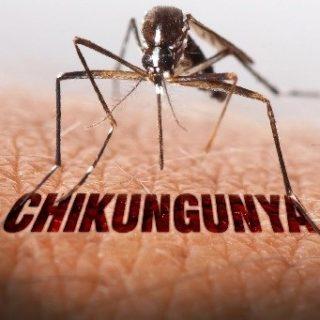 Chikungunya: facciamo chiarezza